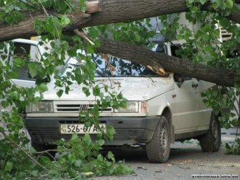 Дерево раздора: в Челябинске подрядчика управляющей компании заставили расплатиться за падение старого клена