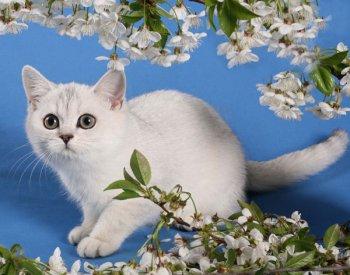 Челябинцев приглашают на «Замурррчательный парад»: 2 марта состоится выставка кошек и ярмарка рукоделия