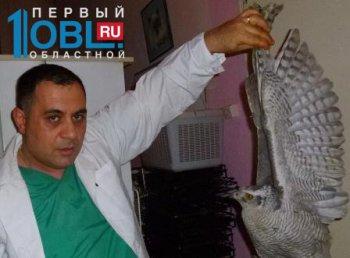В Челябинске спасают жизнь сапсана, пострадавшего от падения метеорита