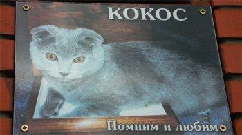 Челябинску необходимо кладбище домашних животных