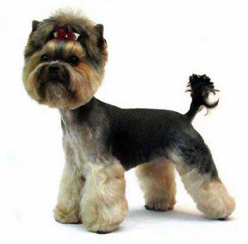 Стили и способы стрижки собак