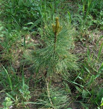 Эксперты оценили состояние деревьев, высаженных в Челябинске в рамках всероссийской акции