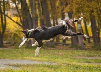 Челябинские псы посоревнуются в ловле тарелочек