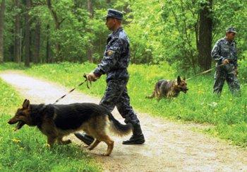 Спасатели Челябинской области нашли пропавших в лесу женщину и семилетнюю девочку
