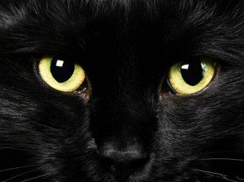 День черного кота в Челябинске совместят с Днем студента