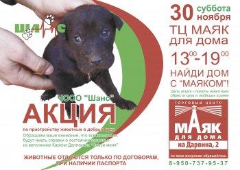 В Челябинске отыщут самых добросердечных людей, которые бескорыстно спасают бездомных животных