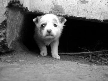 Численность бездомных животных в Челябинске попытаются контролировать гуммаными методами