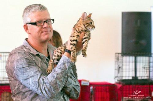 В Челябинске состоялась выставка кошек, приуроченная к сочинской Олимпиаде