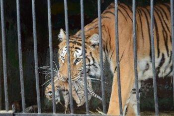 Российская общественность выступает против передвижных зоопарков