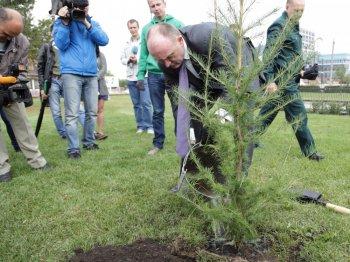 Южноуральский губернатор завершил акцию «277 тысяч деревьев», посадив лиственницу