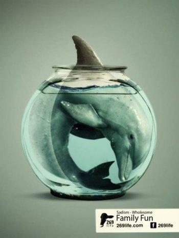 Вологда против переездного дельфинария: защитники животных просят проверить законность его деятельности и проведут акцию