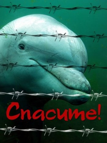 «Хлорированной тюрьме» не место в культурной столице: в Петербурге запрещена деятельность передвижного дельфинария