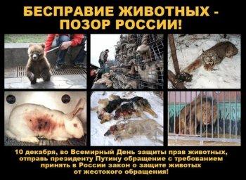 Челябинск отметит Международный День защиты прав животных пикетом у заксобрания