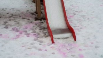В Челябинске живодеры начали разбрасывать отраву на детских площадках