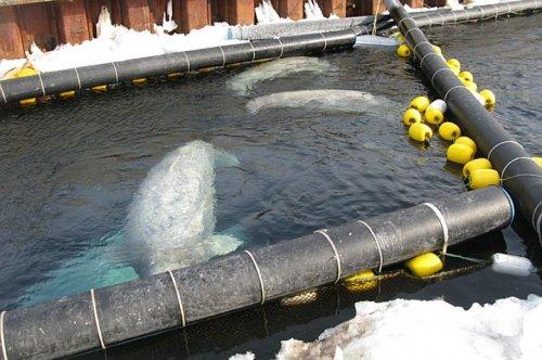 Дельфинарий в Челябинске: в столицу Южного Урала везут узников хлорированной тюрьмы