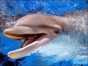 Ученые выяснили: дельфинотерапия не имеет отношения к медицине