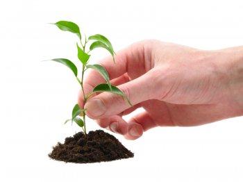 Детские сады и школы Челябинска внесут свой вклад в озеленение родного города