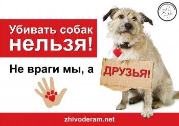 Всероссийский автопробег в защиту бездомных животных пройдет через Челябинск