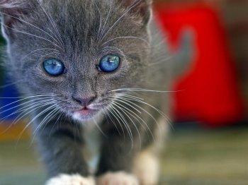 Сотрудник челябинского магазина убил котенка на глазах у покупателей
