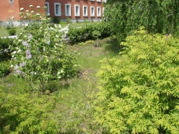 Ботанический сад в Челябинске претендует на статус особо охраняемой природной территории