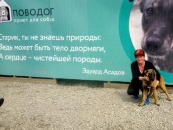 В Челябинской области администрацию города обязали создать приют для животных