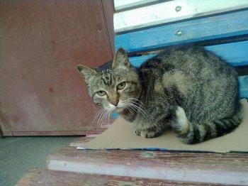 Челябинск: рабочие «Трубодетали» хотят защитить собак и кошек от руководства завода