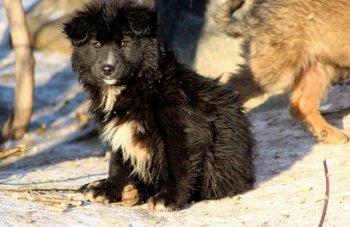 Челябинск: «Трубодеталь» открещивается от убийства собак