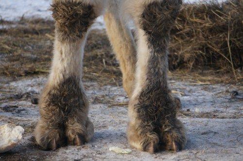 Зверинец «Барс» бросил животных на зиму в Челябинской области?