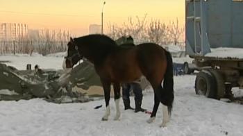 Жители Красноярска бьют тревогу: владелец цирка бросил животных на морозе