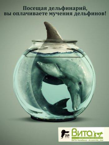 В защиту краснокнижных дельфинов выступят жители Челябинска
