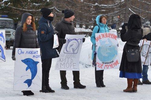Жители Челябинска: «Будем пикетировать до тех пор, пока передвижные дельфинарии не перестанут приезжать!»