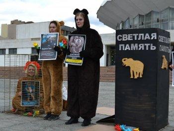 Добрый цирк – цирк без животных. Зоозащитники призовут челябинцев отказаться от жестоких развлечений