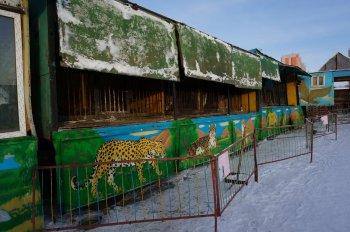 Глава Саткинского района высказался против передвижных зверинцев