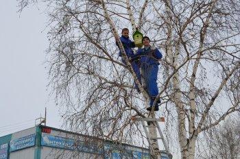 Жители Челябинска каждому скворцу подарили по дворцу