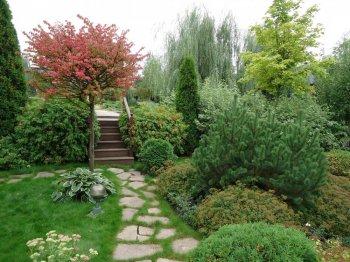 Декоративные растения в озеленении