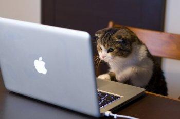 Байки из «инета» - обзор трех самых популярных интернет-страшилок